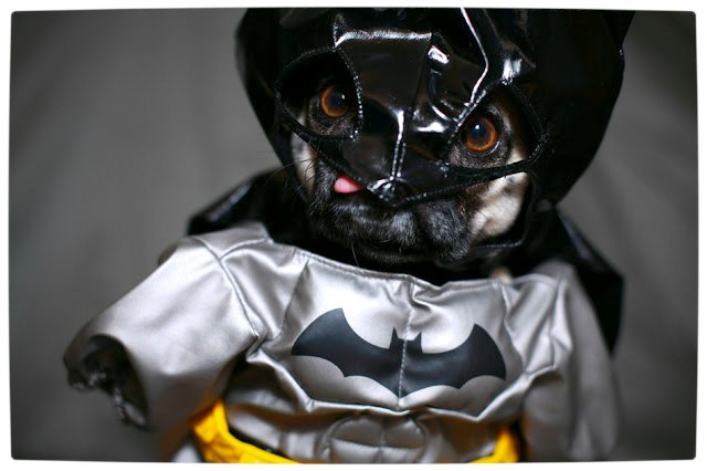 Vamers - Fandom - Batpug The Bark Knight - Batpug New World
