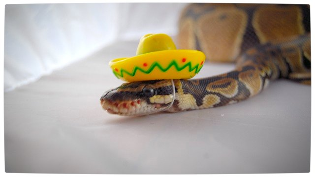 Vamers - Ermahgerd - Forget Snakes on a Plane, It Is All About Snakes Wearing Hats - Mexican Snake
